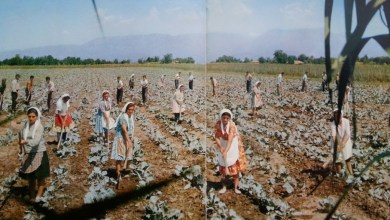 Donne Rurali Albania