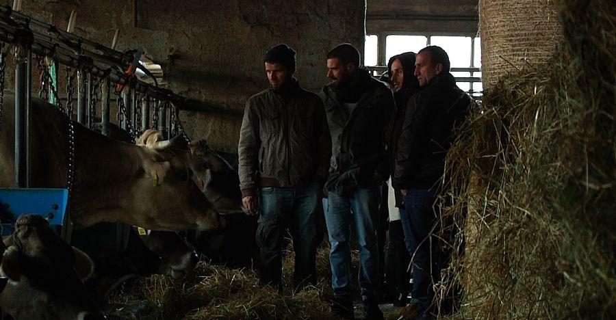 Stalla Mucche