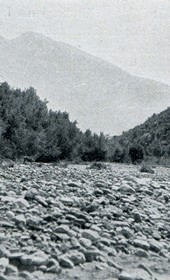 "Jäckh100: ""Rocky bed of the Drin River with grazing cattle"" (Photo: Ernst Jäckh, ca. 1910)."