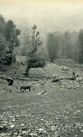GM031: Rainy day near Boga, on the road to Theth (Photo: Giuseppe Massani, 1940).