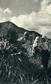 GM070: Harvesting corn near Elbasan (Photo: Giuseppe Massani, 1940).