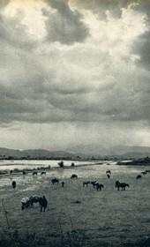 GM116: Fields near Delvina (Photo: Giuseppe Massani, 1940).