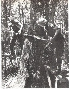 Old Cypress Logging