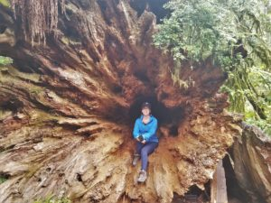 Redwood Root System and Stump
