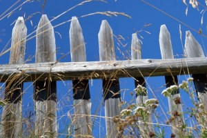 Measures You Can Take to Address Rot On Your Wood Fence