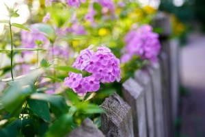 Reasons You Might Install Plants Around Your Fence Line