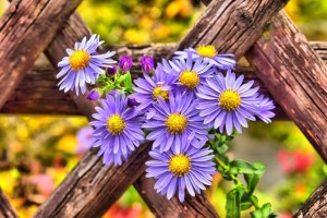 Ways You Can Design Your Fence Panels During Fall