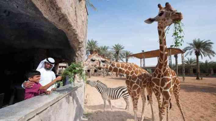 حديقة الحيوانات..تجربة مع الضباب