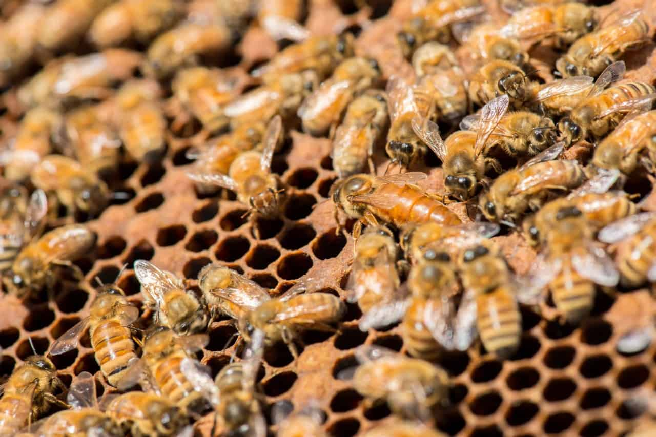 Read more about the article More Than Just Honey