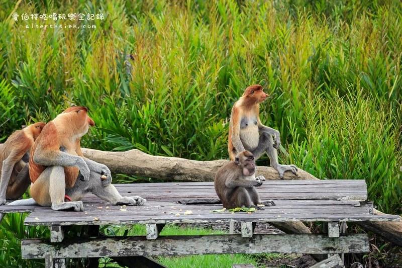 馬來西亞沙巴景點.山打根:拉卜灣