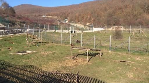 Recinte del santuari óssos Pristina