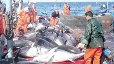 Photo of سنة 2020 : 5 رخص جديدة لصيد التن الاحمر