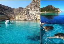 Photo of جزر تونسية مصدر ثروات حيوانية ونباتية