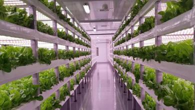 Photo of السعودية تتجه نحو الزراعة العمودية حفاظا على الأمن الغذائي