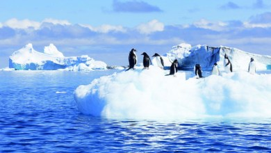 صورة بسبب ارتفاع الحرارة : ذوبان الجليد الأزلي يهدد بموجات تسونامي عارمة في ألاسكا