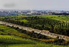 صورة مبادرة في الجزائر  حول إعادة التشجير والحفاظ على المساحات الخضراء