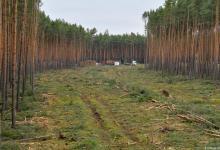 صورة حكم قضائي ألماني ضد شركة تيسلا  لمنع بناء مصنعها في غابة