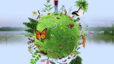 Photo de One Planet Summit en france : Un enjeu crucial pour la préservation de la biodiversité