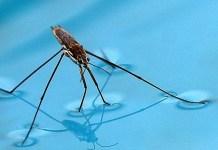 Cum putem preveni pătrunderea diverselor insecte în apa piscinei