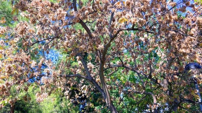 Detalles de otoño en el Parque O' Donell