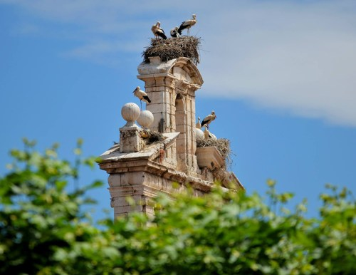Un clásico de Alcalá: Cigüeñas en la Espadaña de San Ildefonso