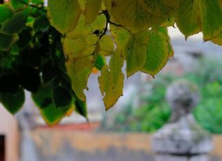 Colores de otoño en el Convento de Trinitarios