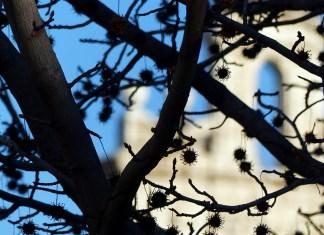Invierno del año cisneriano