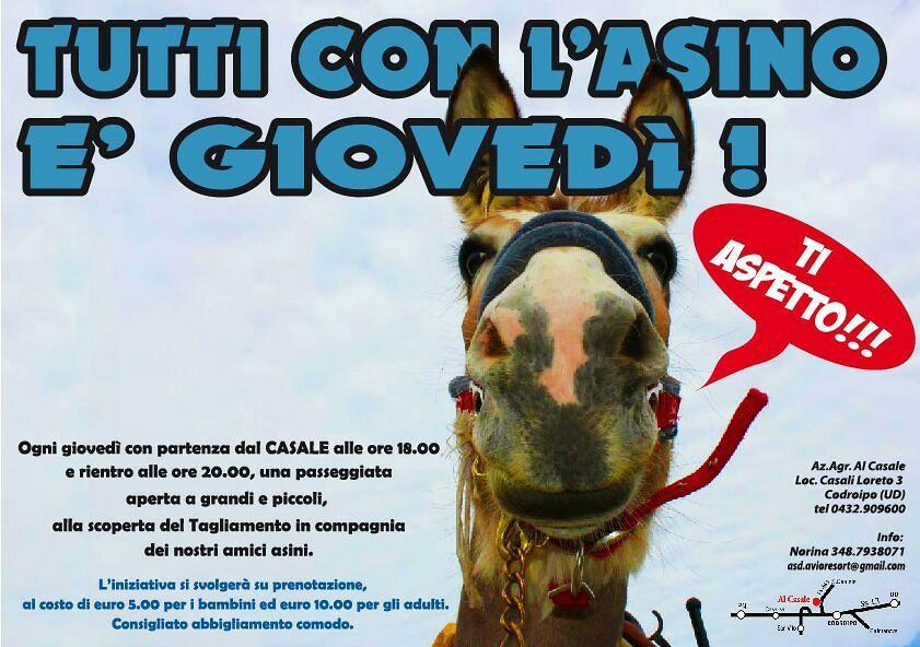 31328507 189737051646970 6055647056905633792 n Giovedì in gita con lasino, Al Casale Codroipo