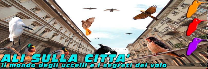 ALI-SULLA-CITTA-banner-piccolo