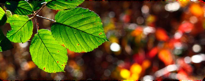 BANNER-colori-della-natura2