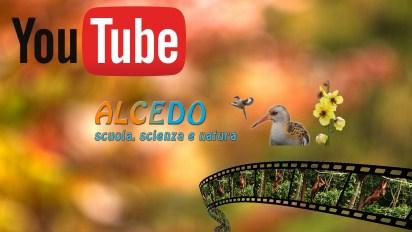 copertina youtube ALCEDO2