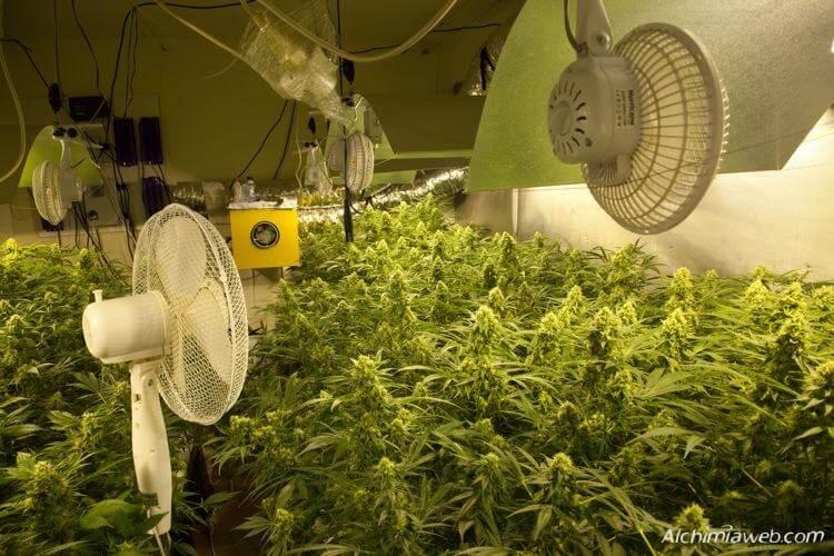 La Ventilacin En El Cultivo De La Marihuana