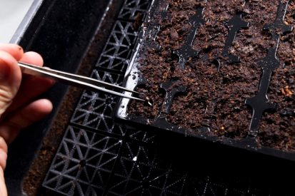 Planting the germinated seed is also a vitally important moment