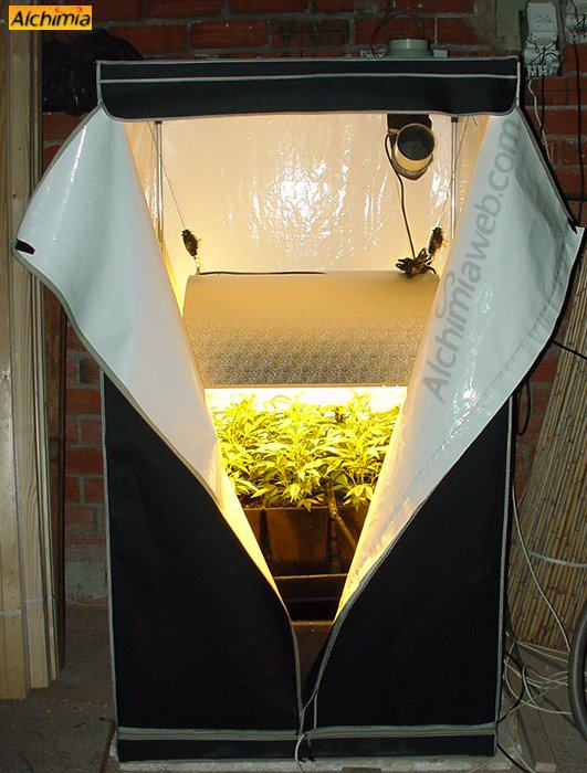 armoire de culture interieur de cannabis