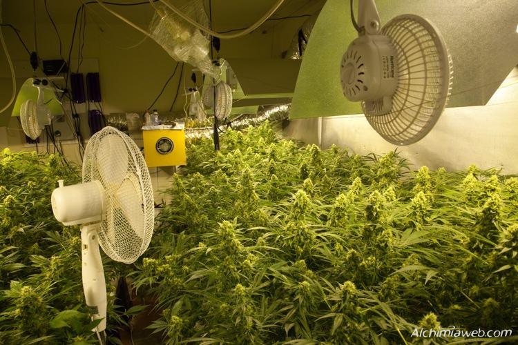 La Ventilation De La Culture De Cannabis Blog Du