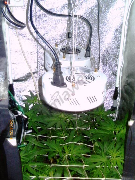 Cultiver Du Cannabis En Espaces Rduits Blog Du Growshop