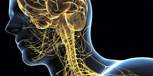 Влияние MDMA на центральную нервную систему - Алкоклиник