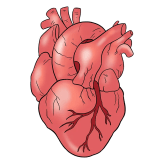 exercise vs. alcohol for heart health