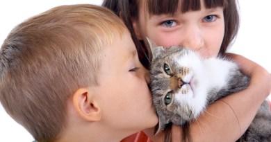 Grupo de Aldeia da Serra organiza feirinha de adoção de gatos