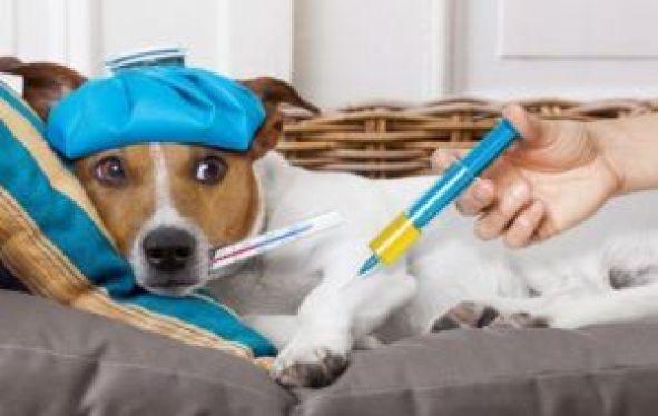 Cuidar la salud de tus mascotas