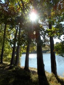 L'étang de St-Bonnet dans la forêt de Tronçais