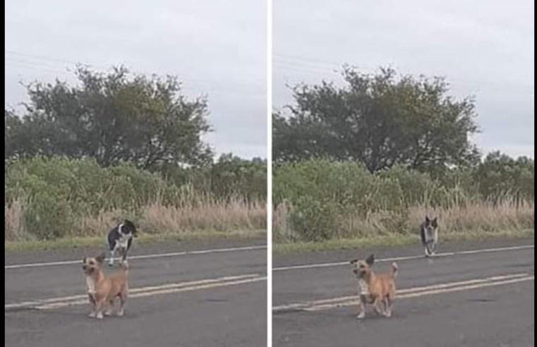 Estupidez: internauta denunciou desova de cães na estrada e foi duramente atacada na internet