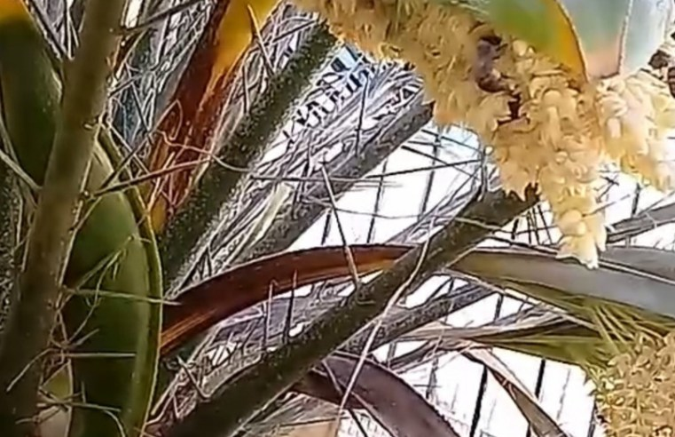 Abelhas protagonizam linda cena num quintal de Alegrete