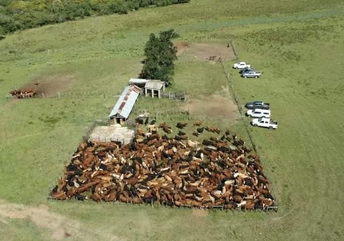 Polícia Civil apreende 568 animais bovinos no interior de Bagé
