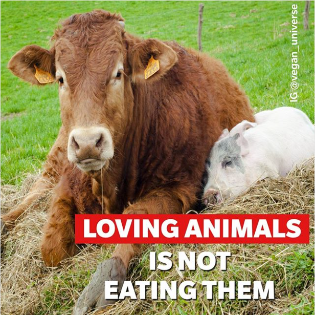 We Humans like to be treated with Equality and Love , but do we do this ourselves