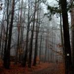 Les ve Štítné na Vláří