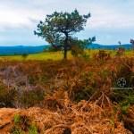 Strom a krajina Španělska