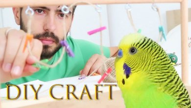 Photo of How to Build Your Own Birds Playground [DIY Project]