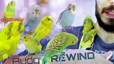 Photo of Budgie Rewind 2019: My Budgie Story #YoutubeRewind