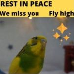 rest-in-peace-budgie